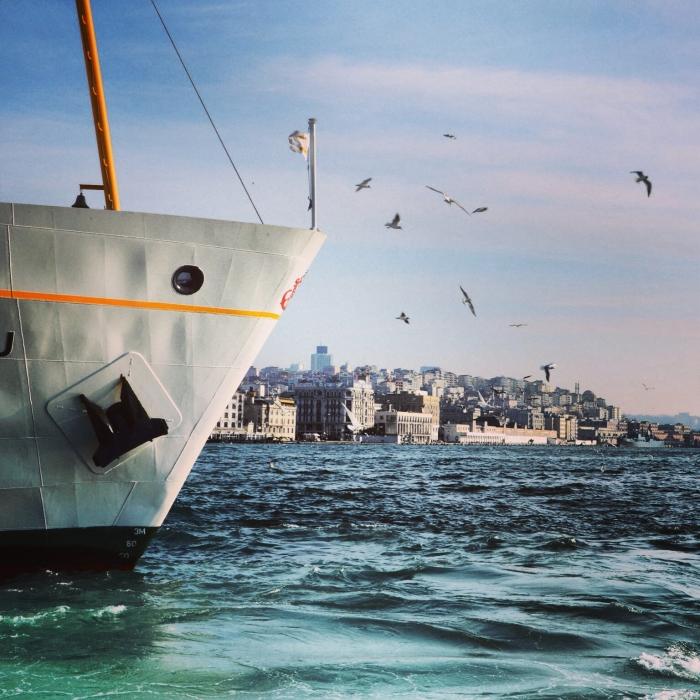 Istanbul_Möven