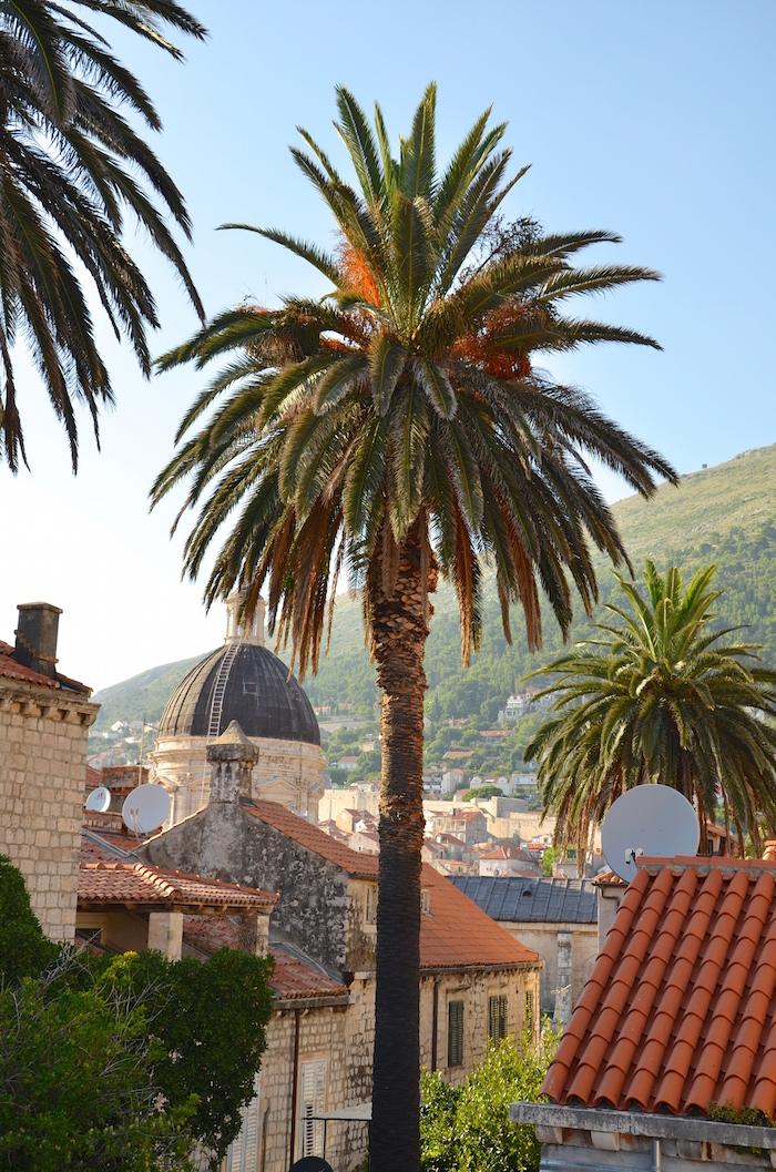 Walls_of_Dubrovnikpalms