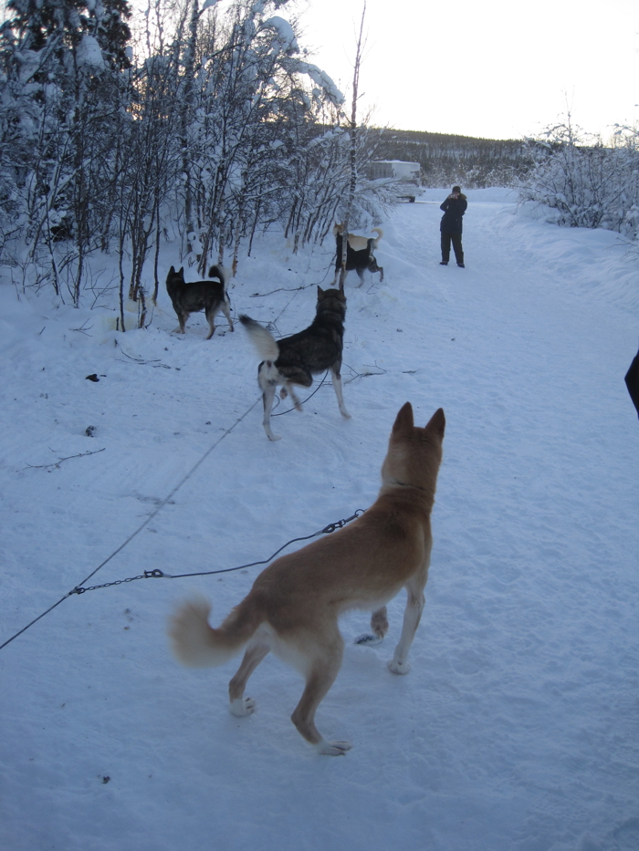 A husky tour and Northern Lights at Kiruna in Sweden