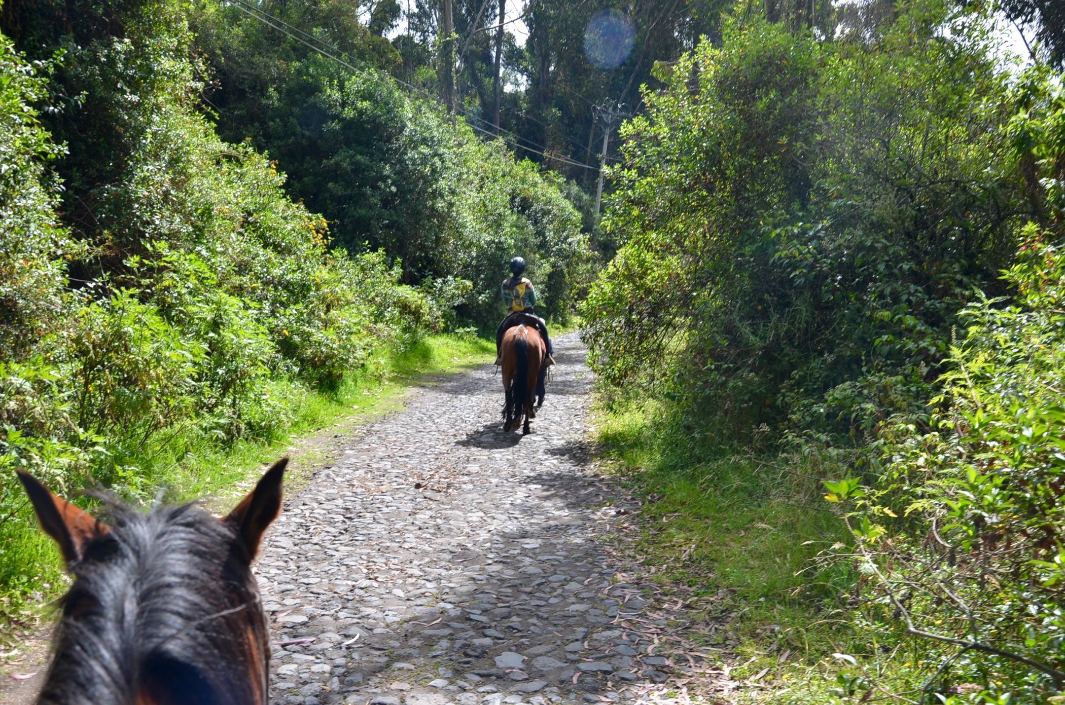 Hosteria_Papagayo_Hotel_Cotopaxi_Ecuador_Horses