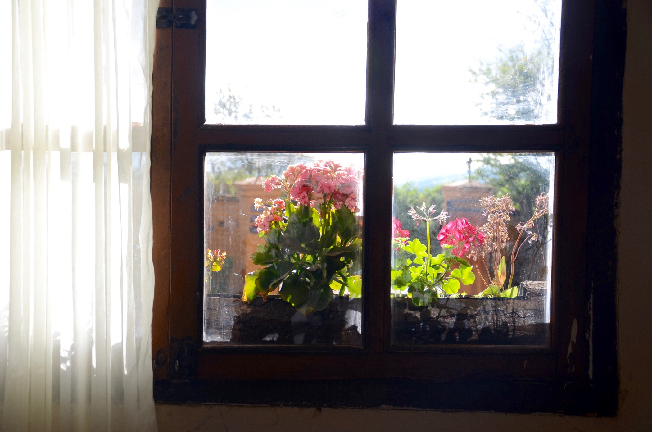 Hosteria_Papagayo_Hotel_Cotopaxi_Ecuador_Window