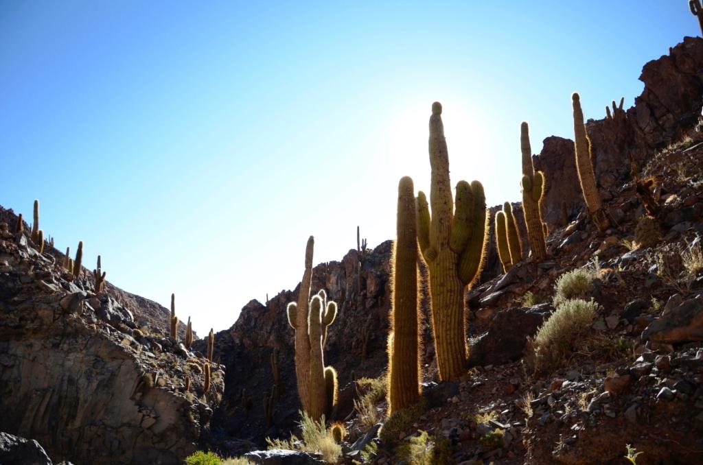 Sehenswürdigkeiten Chile wie das Kaktus Tal